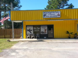Blue Angel Pet Salon - Dogtrack Rd